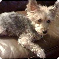 Adopt A Pet :: Riki - Homestead, FL