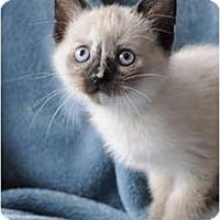 Adopt A Pet :: Baby Gucci - Columbus, OH