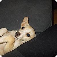 Adopt A Pet :: Monet - Apex, NC