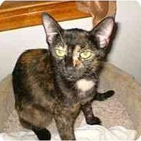 Adopt A Pet :: Coco - Milwaukee, WI