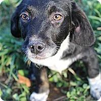 Adopt A Pet :: Skeeter - Wytheville, VA
