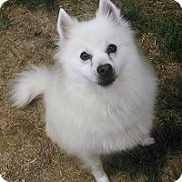 Adopt A Pet :: Cueto - Elmhurst, IL