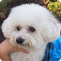 Adopt A Pet :: Harper - La Costa, CA