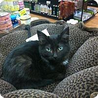 Adopt A Pet :: Bell - Hamilton, ON