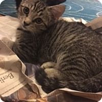 Adopt A Pet :: Rhubarb - Brooklyn, NY