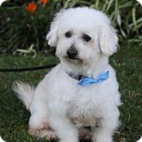 Adopt A Pet :: WATSON - Newport Beach, CA