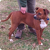 Adopt A Pet :: Rosie - Metamora, IN