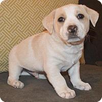 Adopt A Pet :: Breakfast: Pancake - Corona, CA