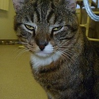 Adopt A Pet :: Smitty - Hamburg, NY
