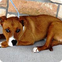 Adopt A Pet :: Jimbo - Artesia, NM