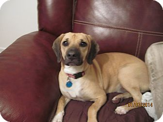 Hound (Unknown Type) Mix Dog for adoption in Richmond, Virginia - Rosie