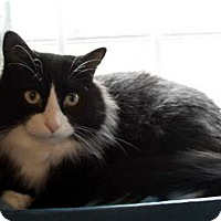Adopt A Pet :: Simon - Merrifield, VA