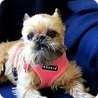 Adopt A Pet :: LIZZY - ADOPTION PENDING - Clinton, CT