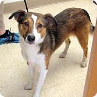 Adopt A Pet :: Micah - Ludington, MI
