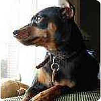 Adopt A Pet :: Ricky - Nashville, TN