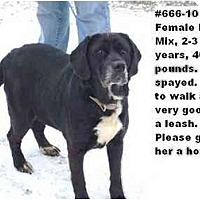 Adopt A Pet :: # 666-10 @ Animal Shelter - Zanesville, OH