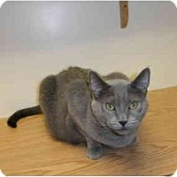 Adopt A Pet :: Harvey - Milwaukee, WI