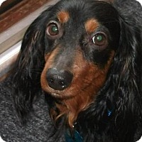 Adopt A Pet :: Sid-Pending Adoption - Omaha, NE