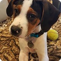 Adopt A Pet :: Deputy Dog - Knoxville, TN