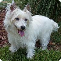 Adopt A Pet :: Claire-Adoption pending - Bridgeton, MO
