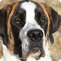 Adopt A Pet :: Bussie (Buster) - Bellflower, CA