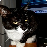 Adopt A Pet :: Miss Houdini - Brooklyn, NY