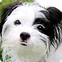 Adopt A Pet :: ASIA(ADORABLE