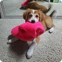 Adopt A Pet :: Bubbles - Broken Arrow, OK