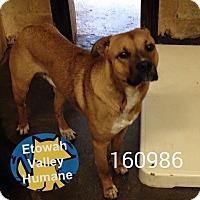 Adopt A Pet :: Hayden - Boston, MA