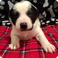 Adopt A Pet :: Ardee - Moyock, NC