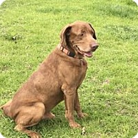 Adopt A Pet :: Steve - San Francisco, CA