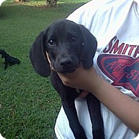 Adopt A Pet :: Brewster - West Bridgewater, MA