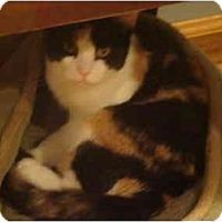 Adopt A Pet :: Annie - Muncie, IN
