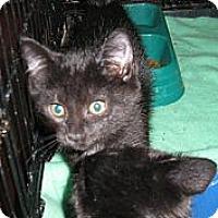 Adopt A Pet :: Jerry and Joe - Harriman, NY