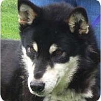 Adopt A Pet :: Dyson - Kettle Falls, WA