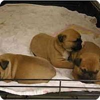 Adopt A Pet :: 3 BOYS - DFW, TX