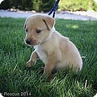 Adopt A Pet :: Jimmy John - Broomfield, CO