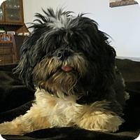 Adopt A Pet :: Geisha - McLoud, OK