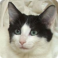 Adopt A Pet :: Leticia V - Sacramento, CA