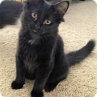 Adopt A Pet :: Harry Potter - Eagan, MN