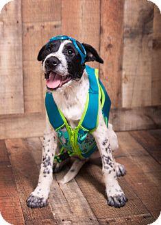 Shepherd (Unknown Type)/Terrier (Unknown Type, Medium) Mix Puppy for adoption in Waterbury, Connecticut - Michael