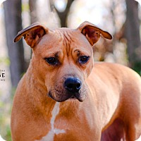 Adopt A Pet :: Connie - Edwardsville, IL