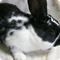 Adopt A Pet :: Cooper - Harrisburg, PA