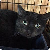 Adopt A Pet :: Victor - Breinigsville, PA