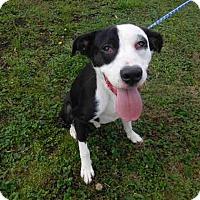 Adopt A Pet :: Murphy - McKinleyville, CA