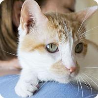 Adopt A Pet :: Bruno - Huntsville, AL