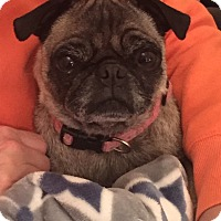 Adopt A Pet :: Buttons - Jackson, TN