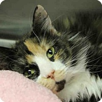 Adopt A Pet :: LILLIE - Decatur, IL