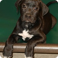Adopt A Pet :: Colby - Union, CT