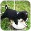 Photo 2 - Australian Shepherd Mix Puppy for adoption in Orlando, Florida - Danny